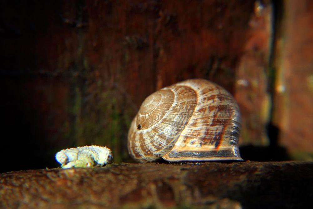 Mollusc by AmirAli Ranvar