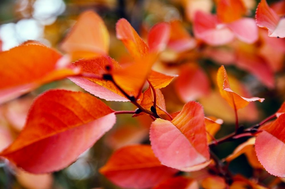 Fall by AmirAli Ranvar