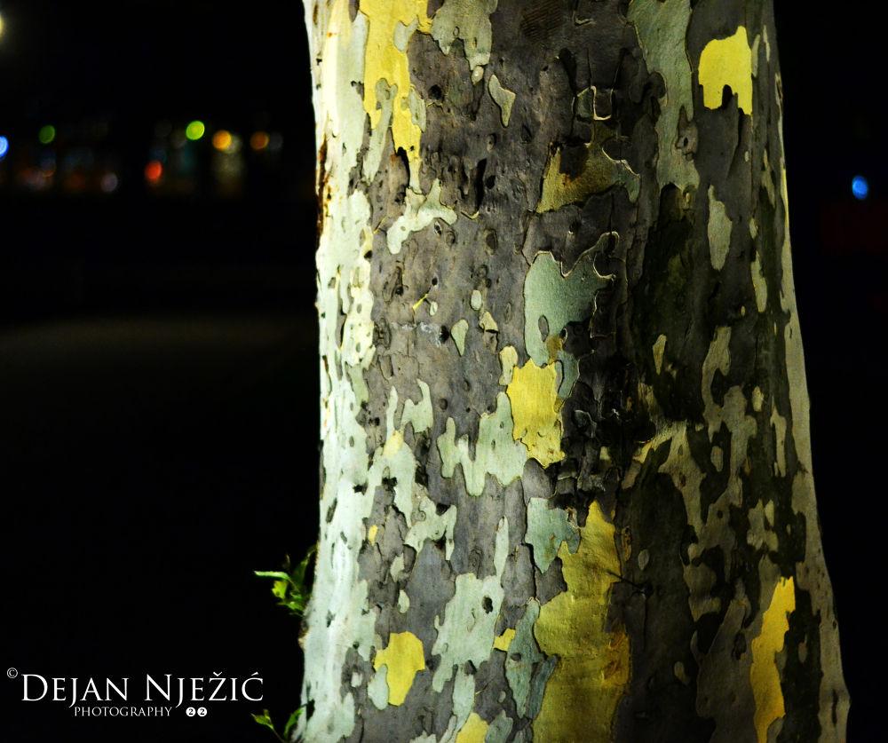 drvo by njezic2284