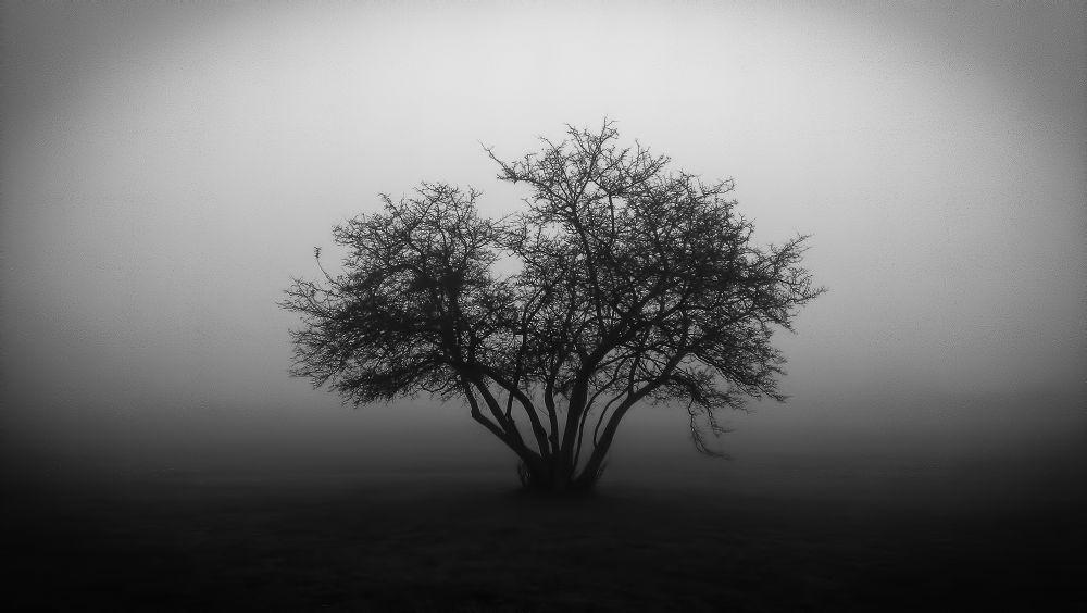 tree by Wes Mieszczak