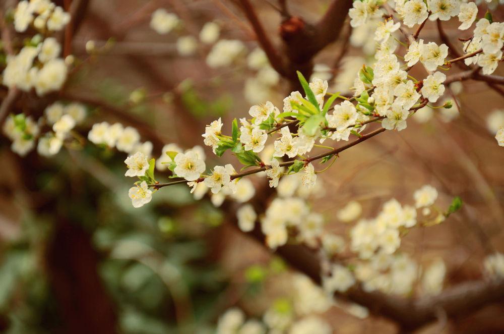 Spring... by Sheyd4