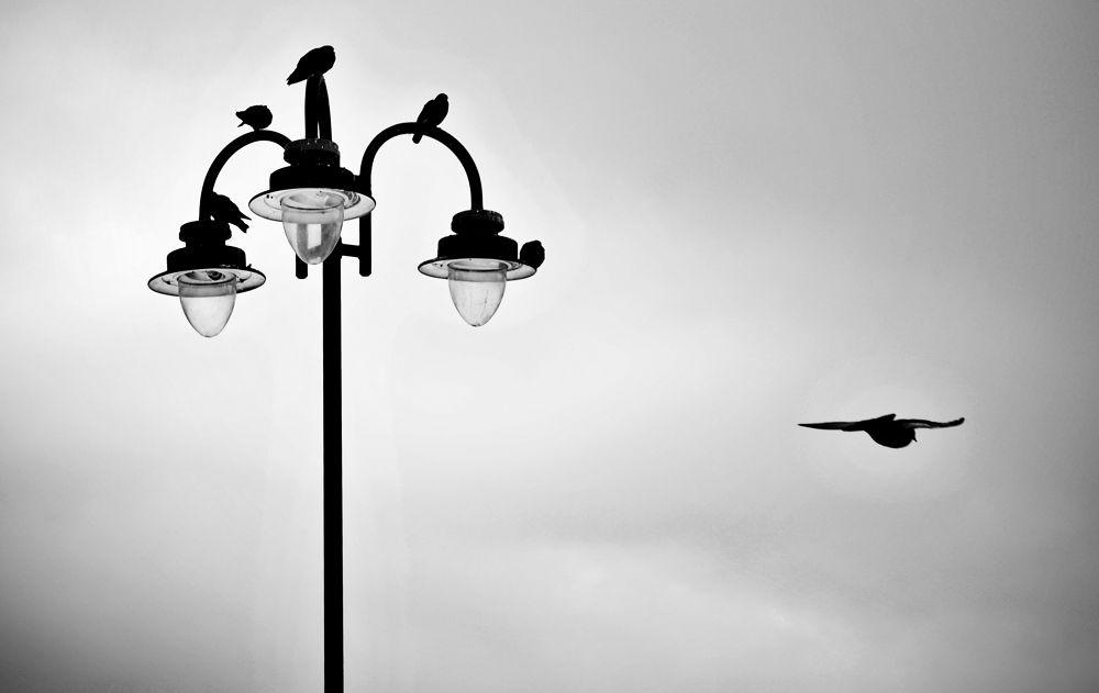 Photo in Random #pigeon #air #brasov #random #conceptual #moment #romania #andi topiczer #art #photography