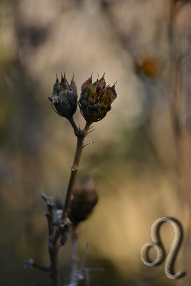 dried ... by Aleksandra Bijelic