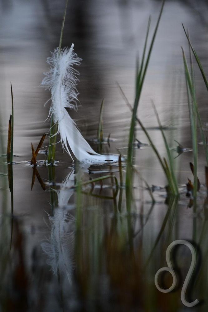 softly... by Aleksandra Bijelic