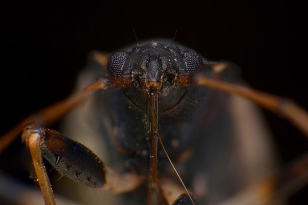 Photo in Macro #macro #face #nature #lensrevers #revers #animal
