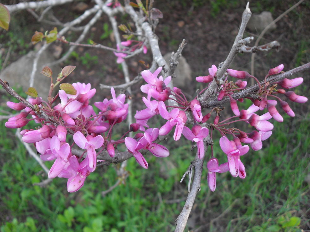 SDC13671Small tree blooming by gavriealzohar