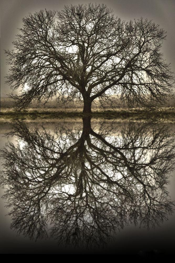 Tree by IsabelMaldonado