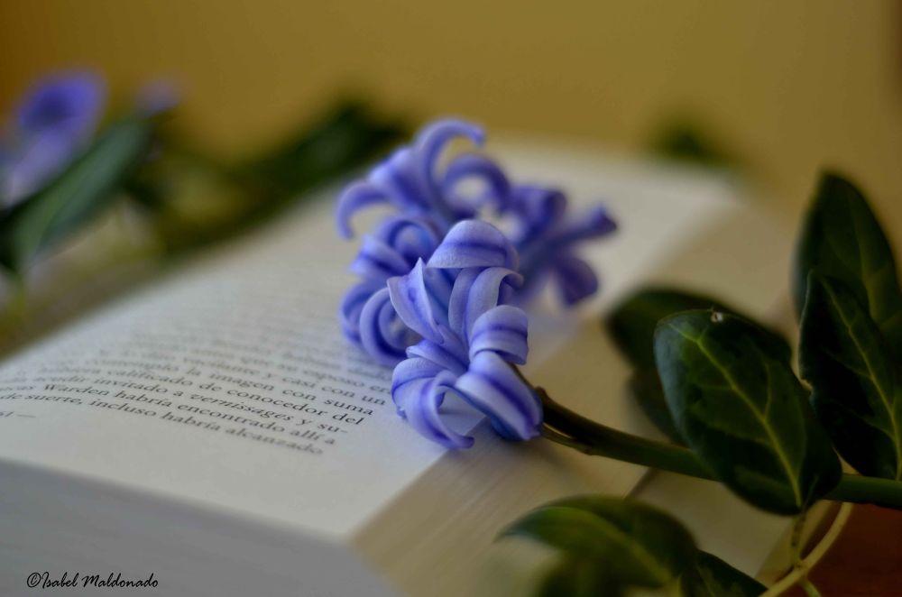 Photo in Abstract #libro #romantico #lectura #malva