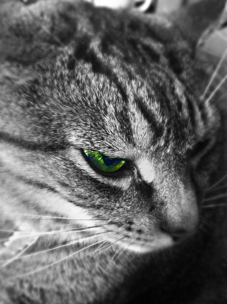 Cat by jesshs