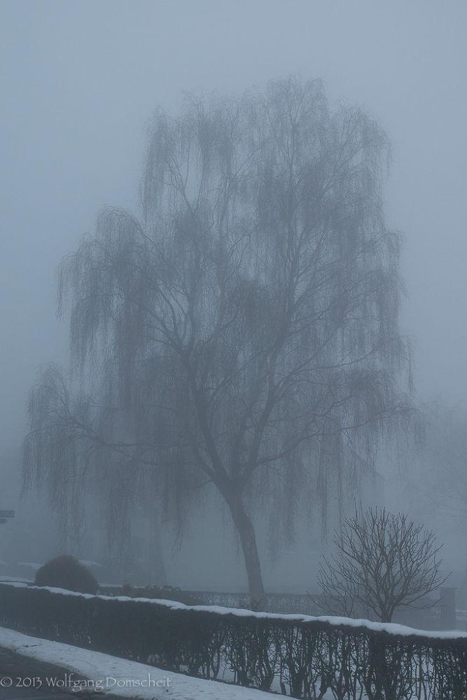 Fog by wolfdomscheit