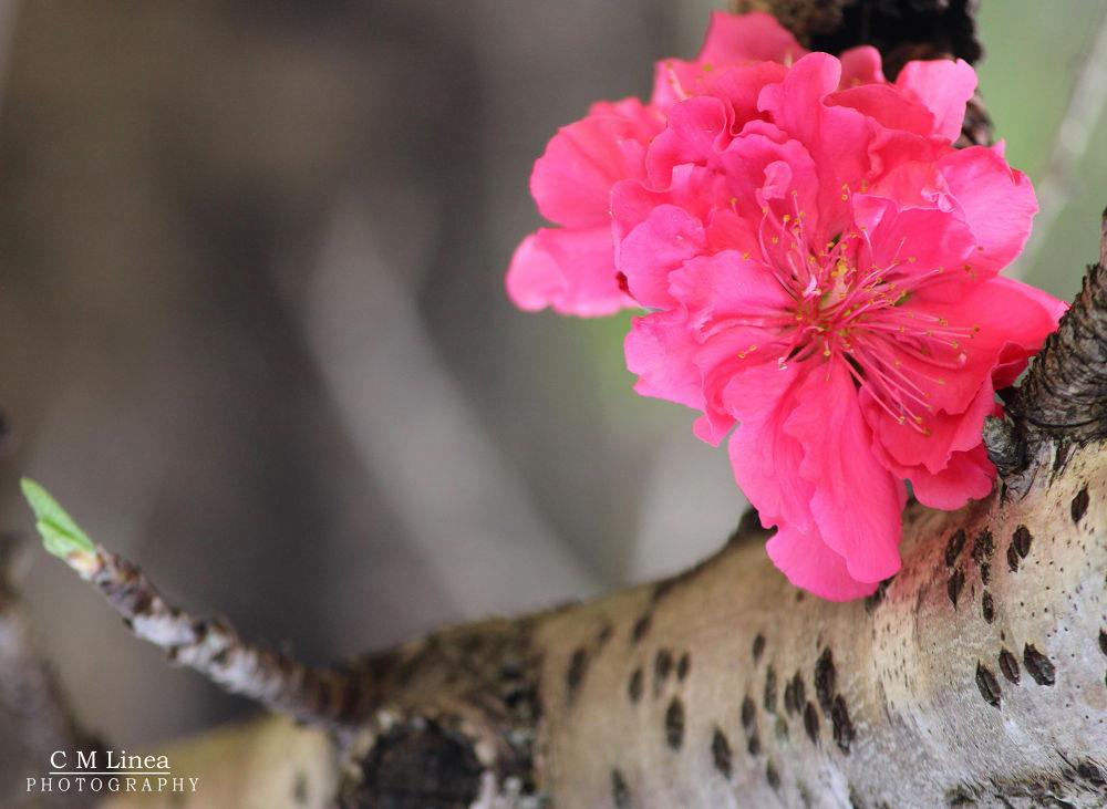bloom by cmlinea