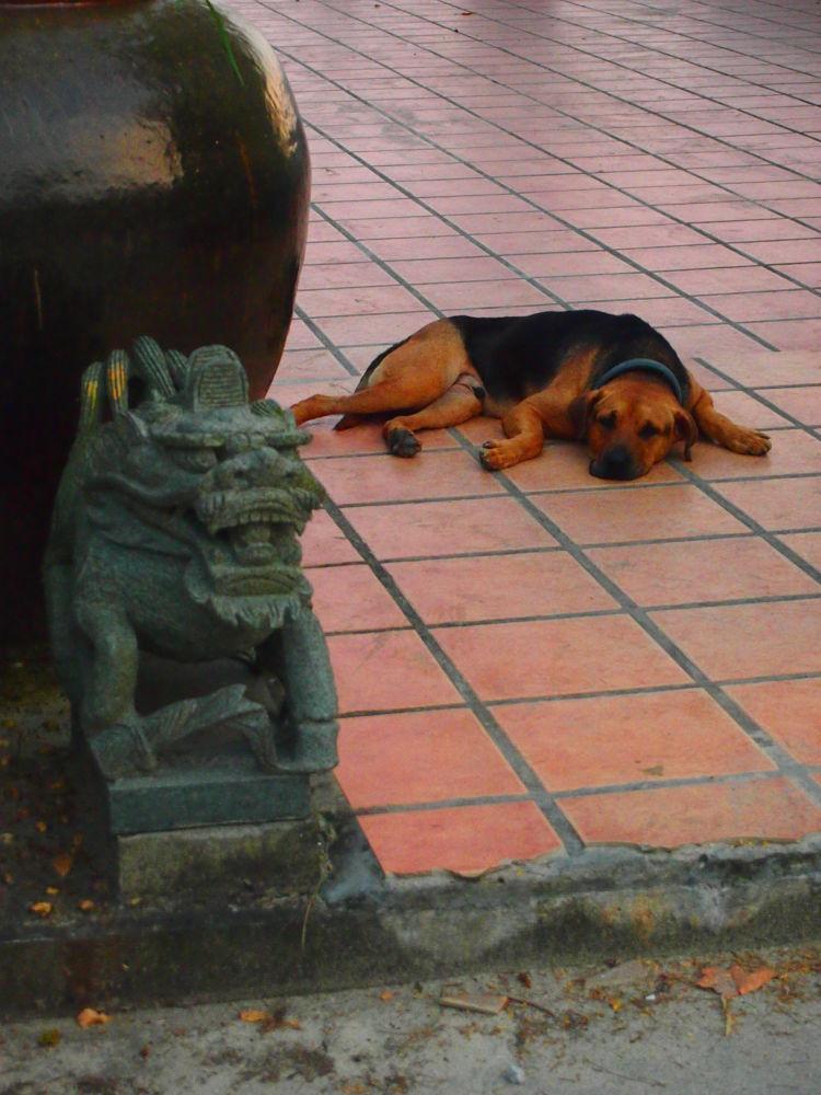 Lazy Dog (2013) by Mickey Lee