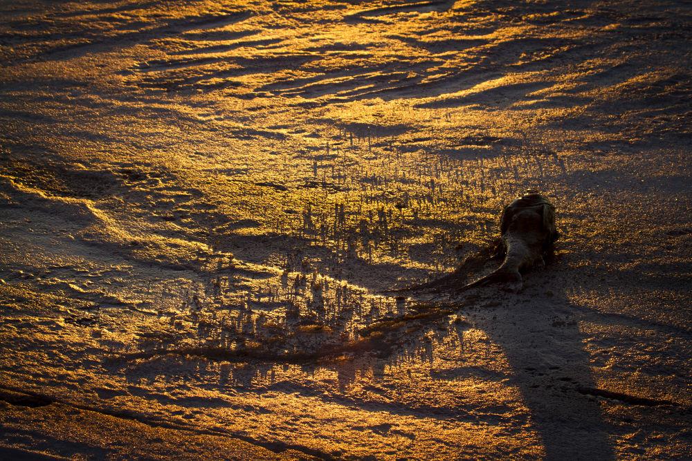 Dead Carp by RichardKeeling