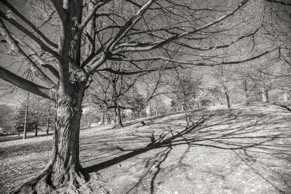Photo in Landscape #forest park #winter #tree #shadow