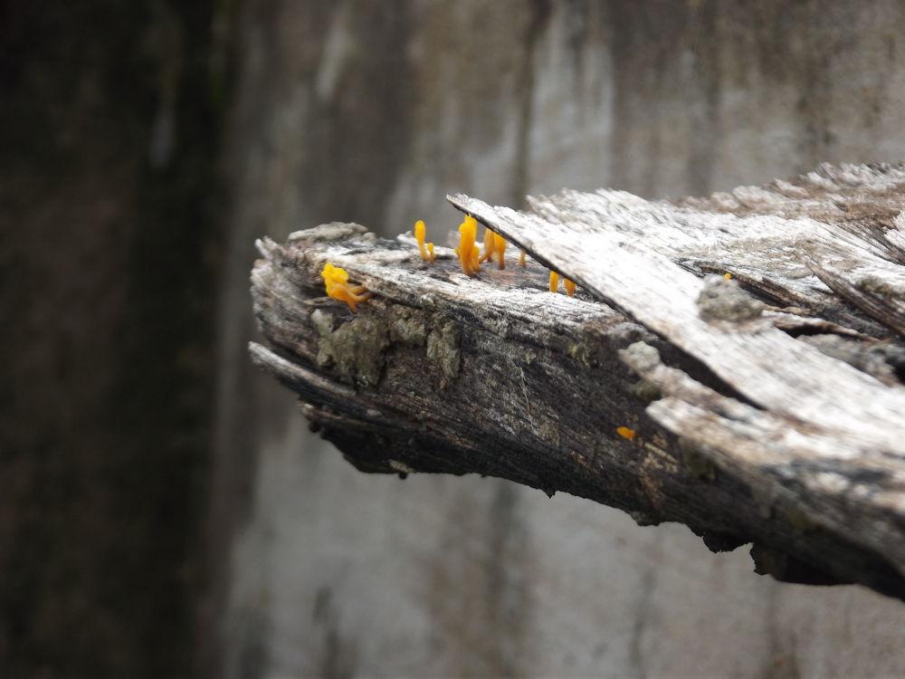 Orange Wood Mushrooms  by Rahul Kumar Saha