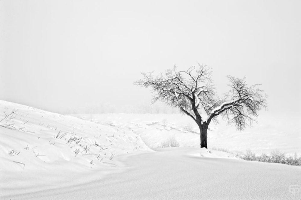 lonelines by giotarantini