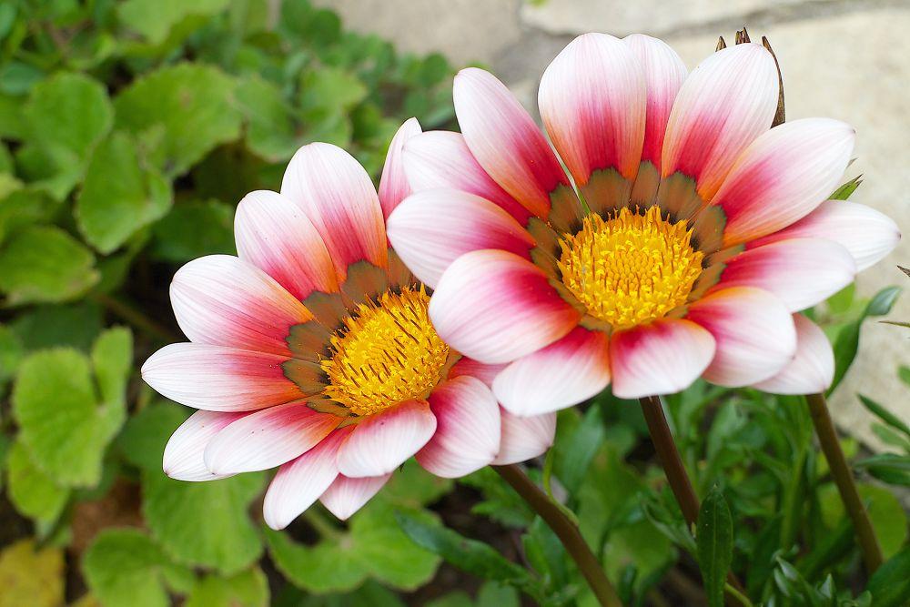 flowers by Thiago Trevisan