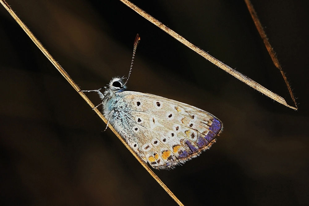 butterfly by cananyasar