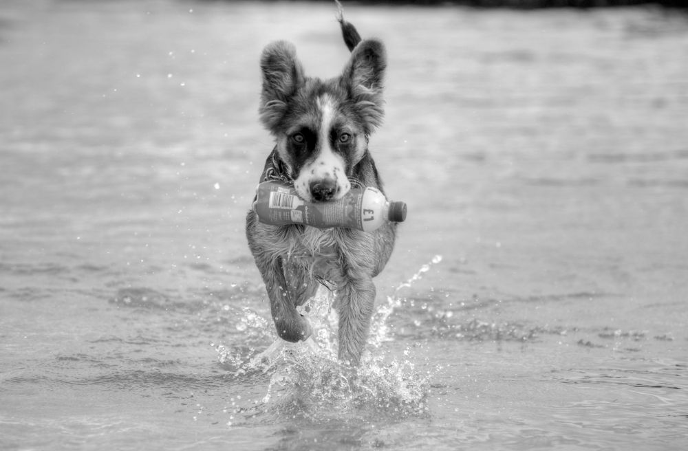 lively bubbly pooch  by marieleather