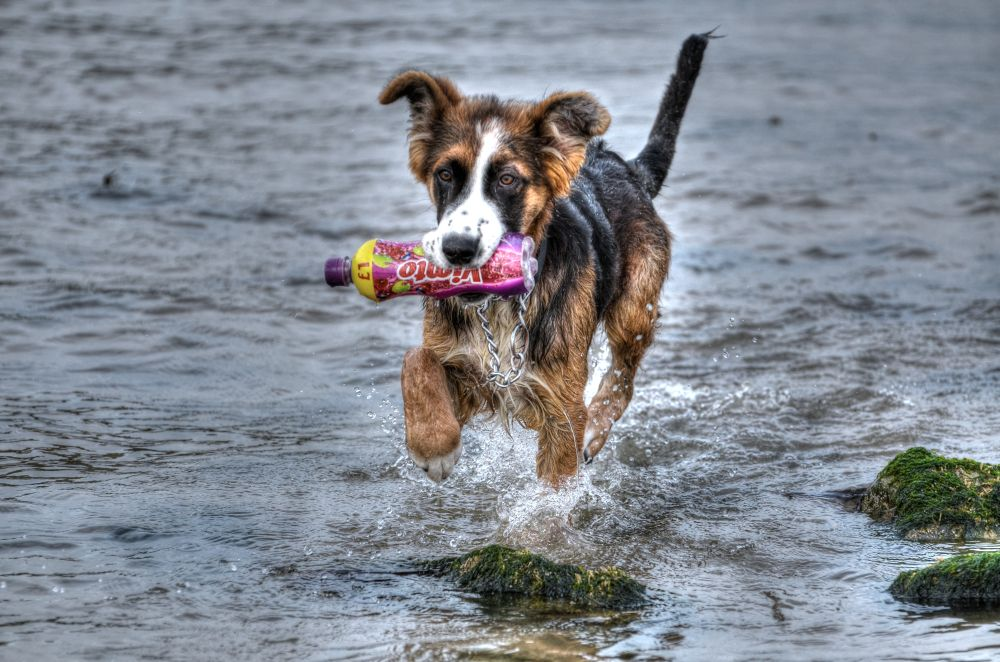 toby on the fizz  by marieleather