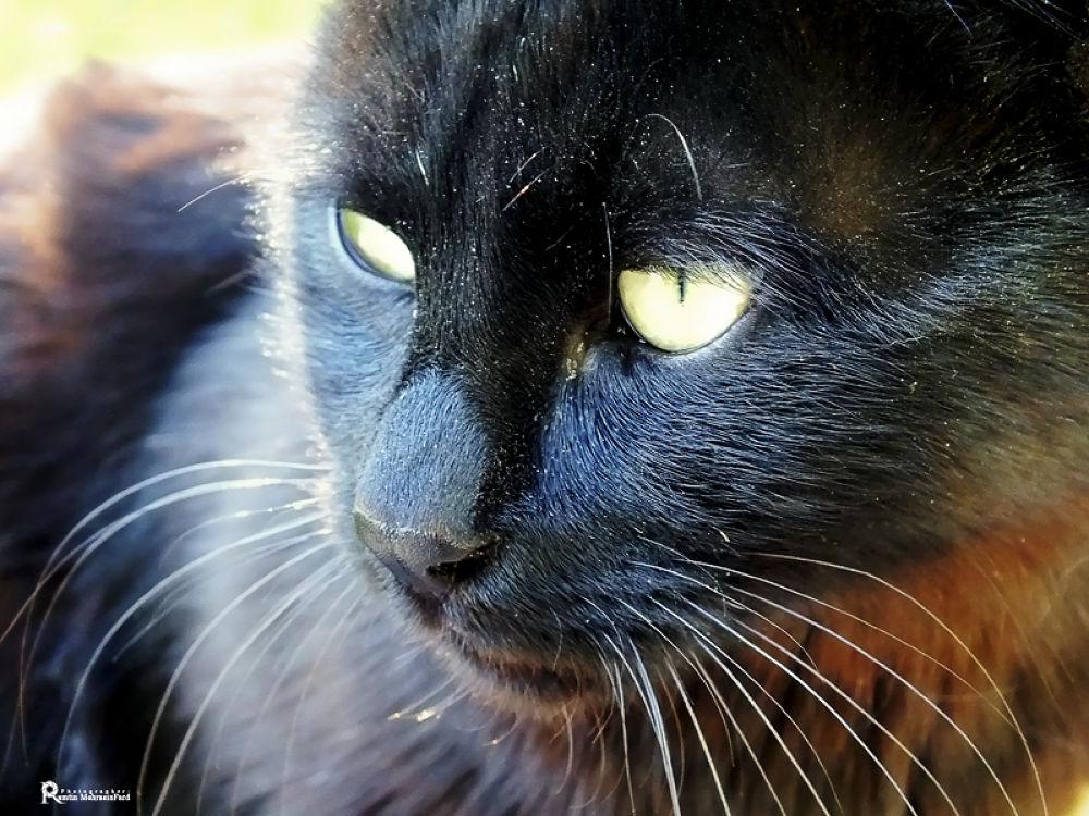 Cat by Ramtin MehraeenFard