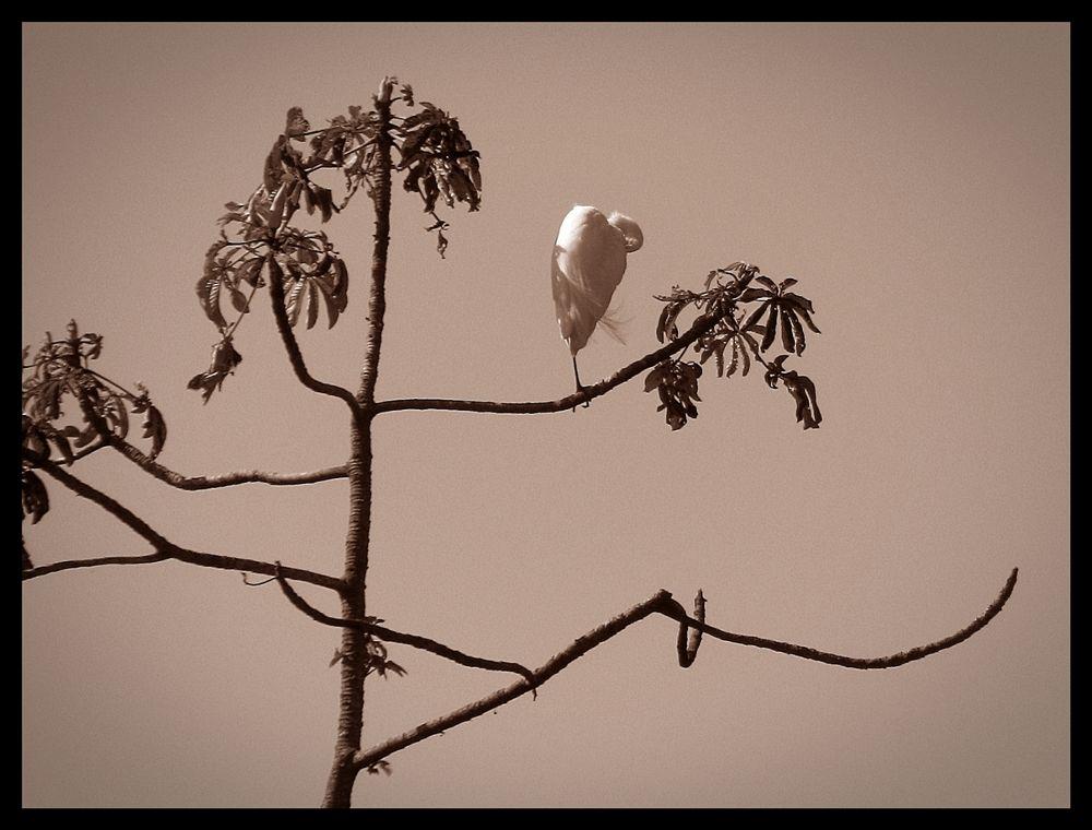 Photo in Random #cataratas del iguazú #aves #nature