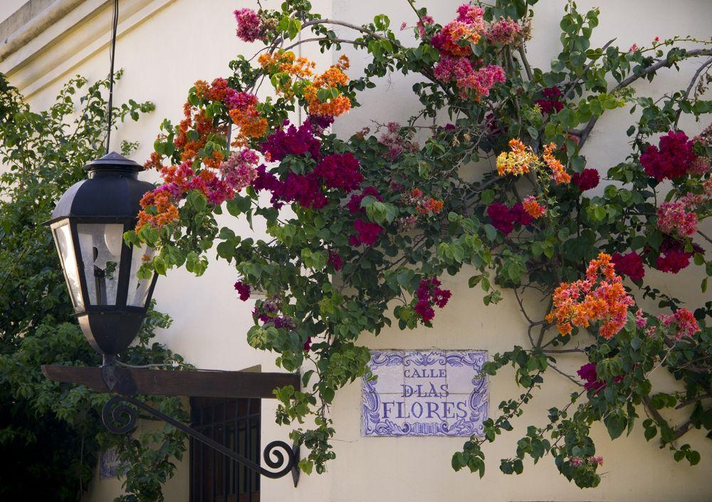 Calle de las Flores by Marcedelrio
