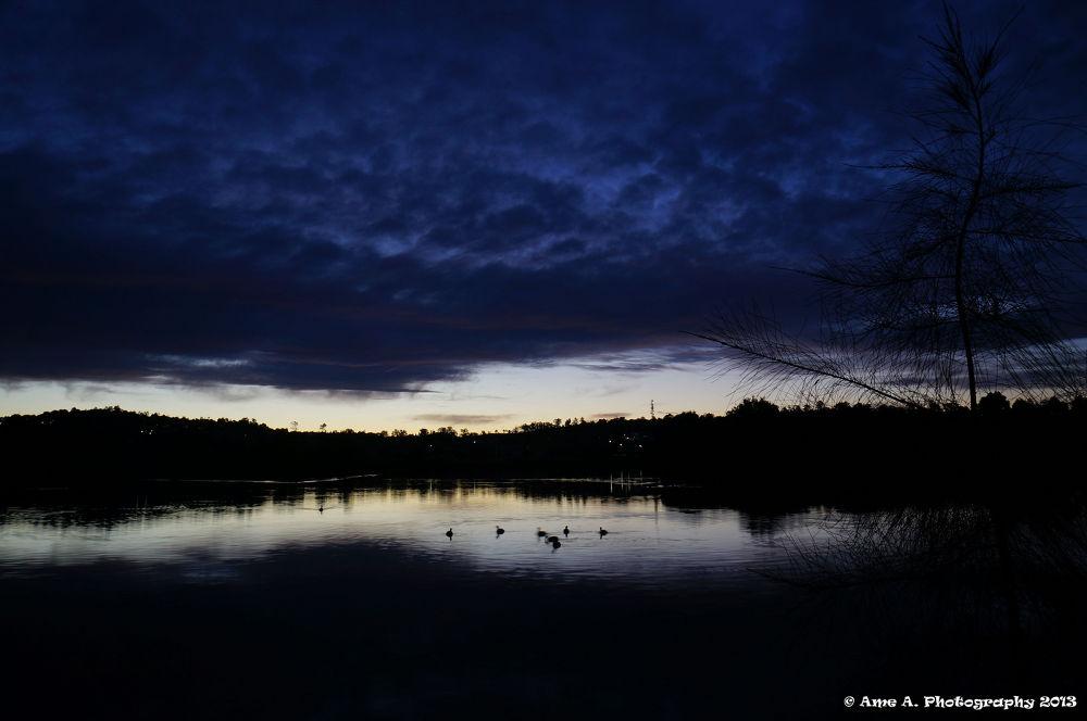 Sunset: Duck Party by Argie Alvarez-Calibo
