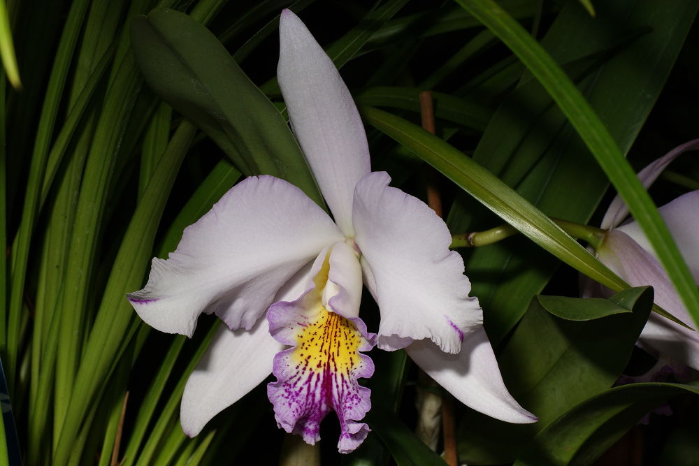 Photo in Nature #orchidé