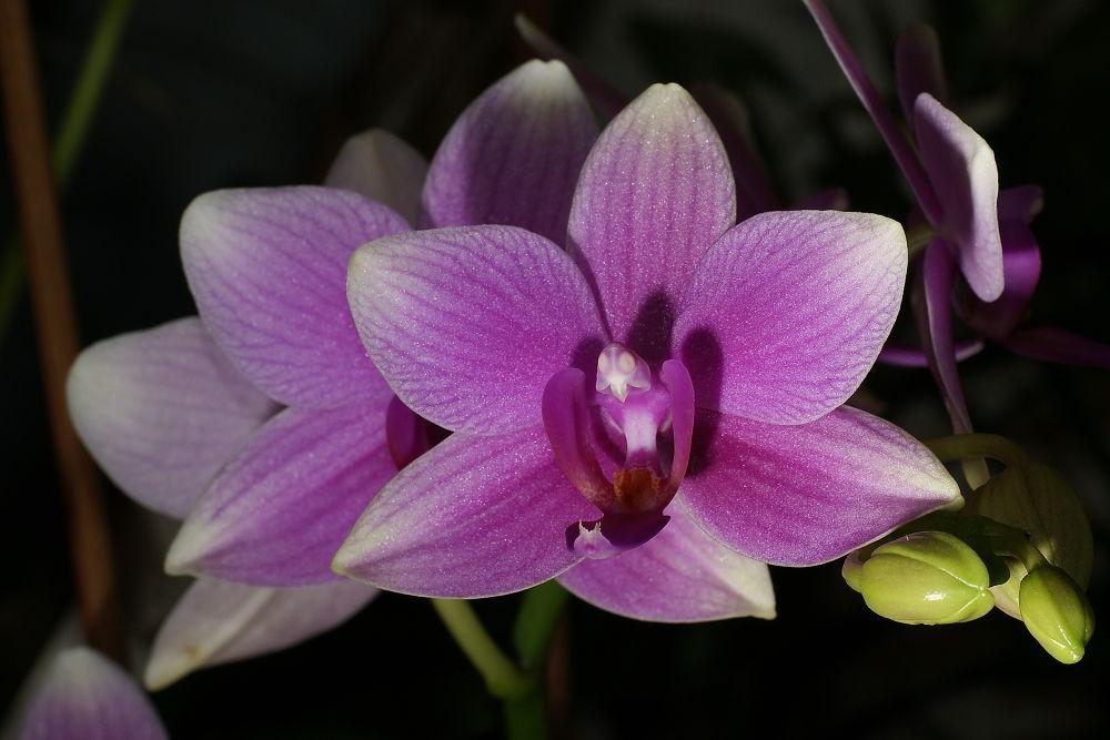 Orchidé by mauricepancheri