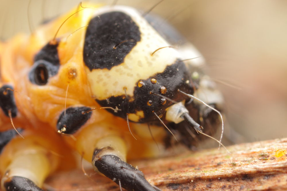 larvae by polam
