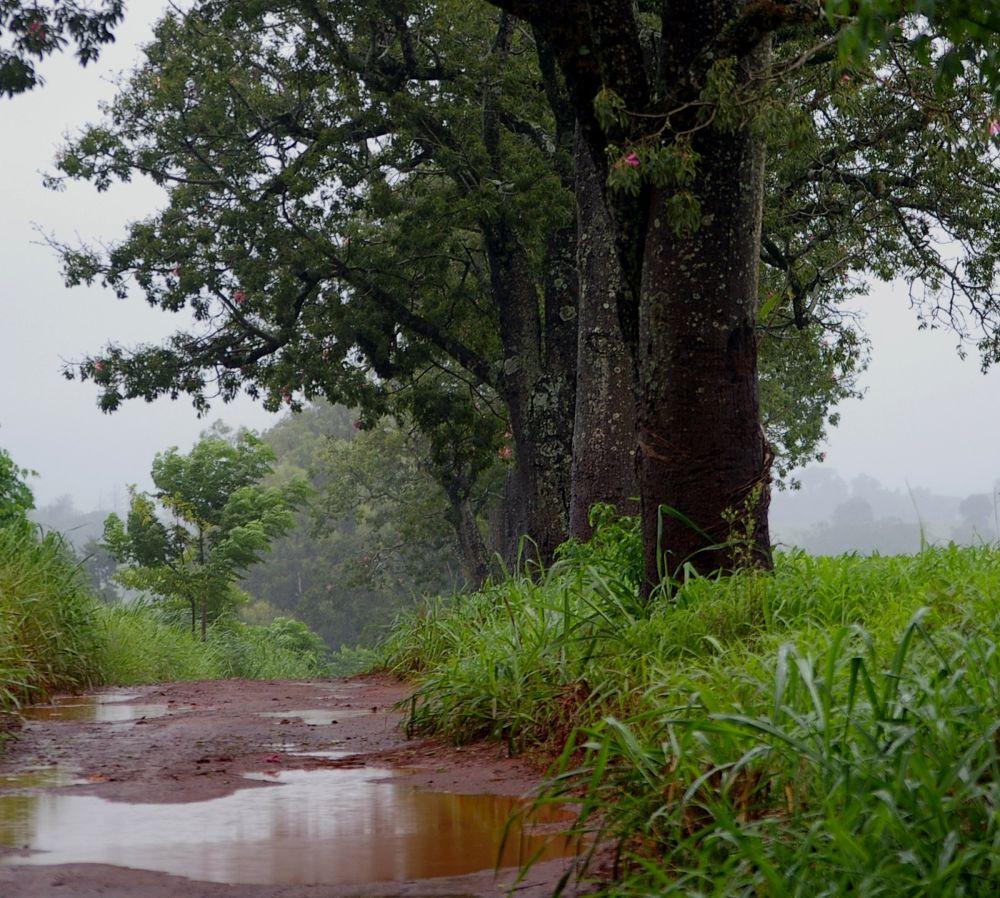 After the rain II by marceloazevedo1972