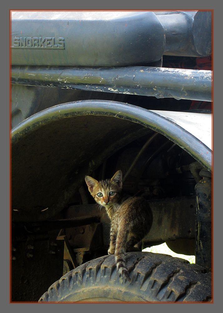 the mechanic by jmaccruz