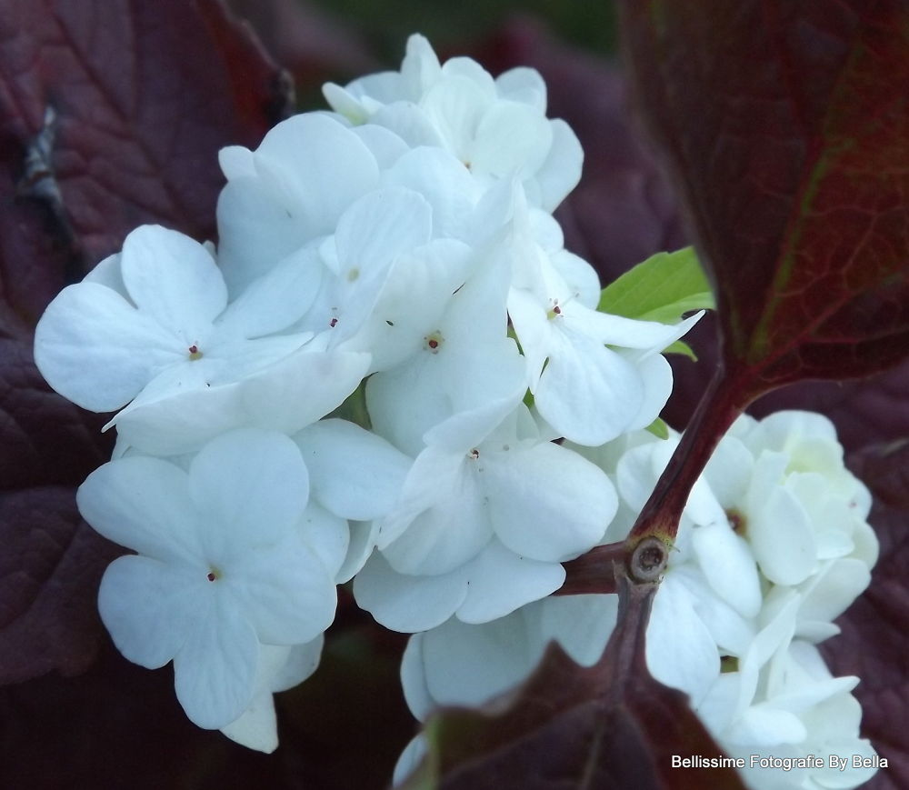 Pretty White Flowers by Angie Hall