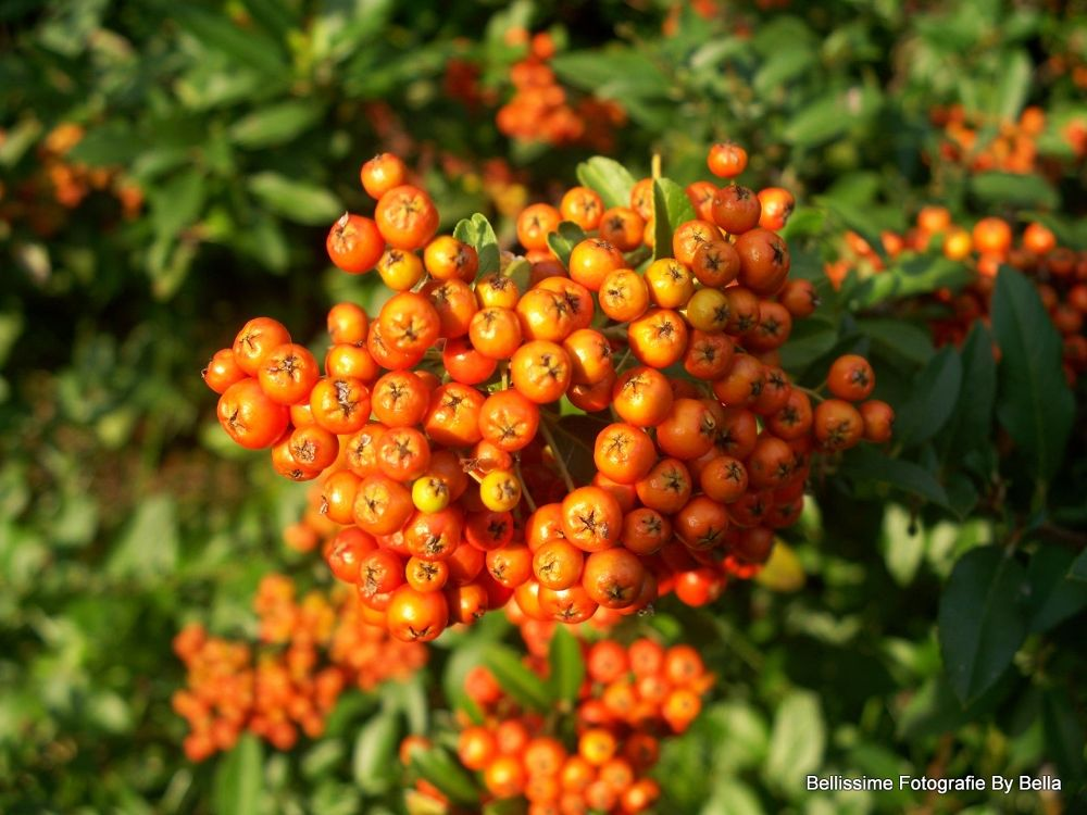 Orange Berries by Angie Hall