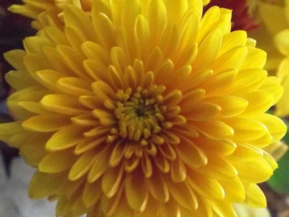 Sunshine by Angie Hall