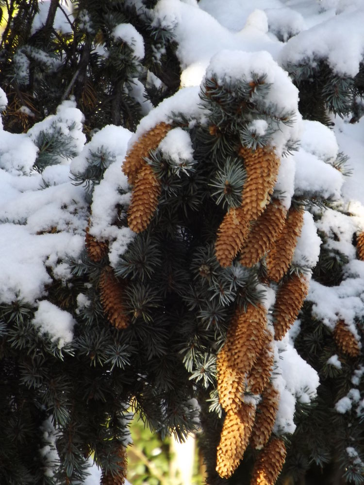 Snowy Cones by Angie Hall