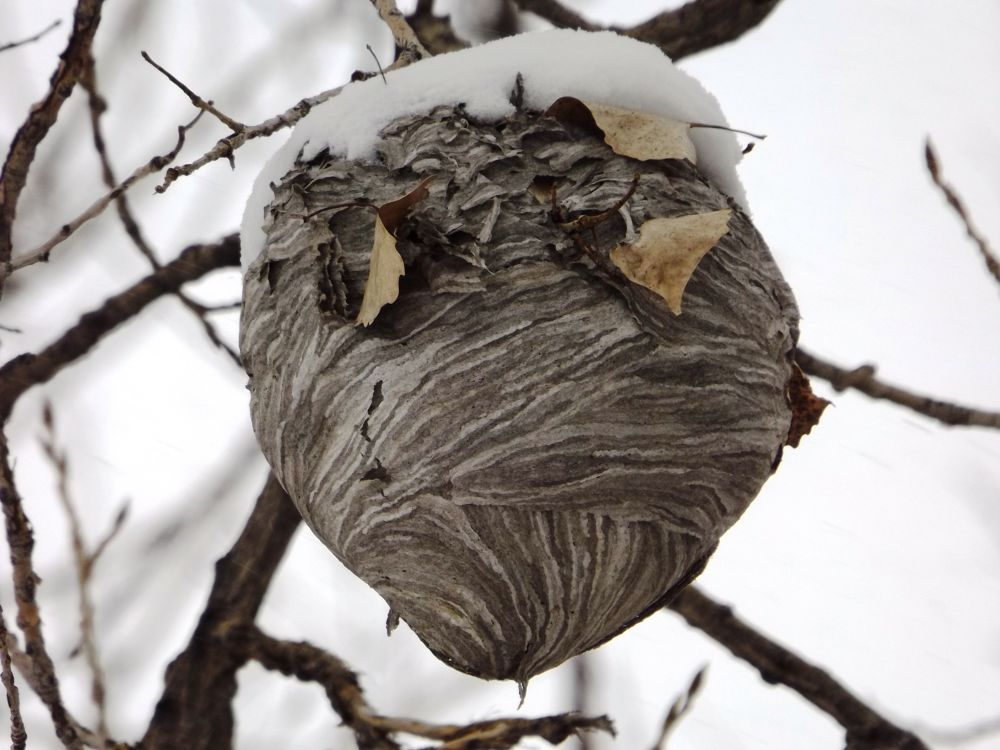 Hornet's Nest by Angie Hall