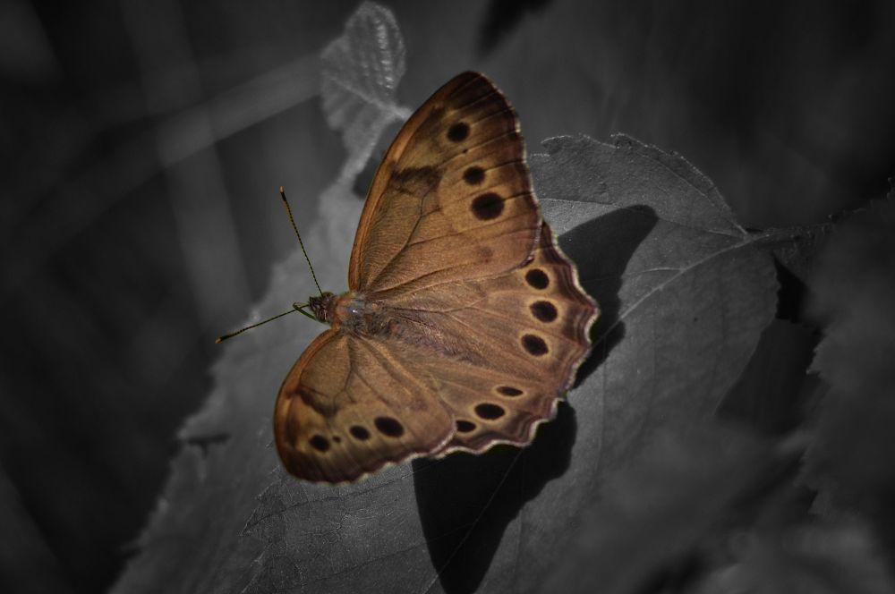 Moth  by paulhamilton969952