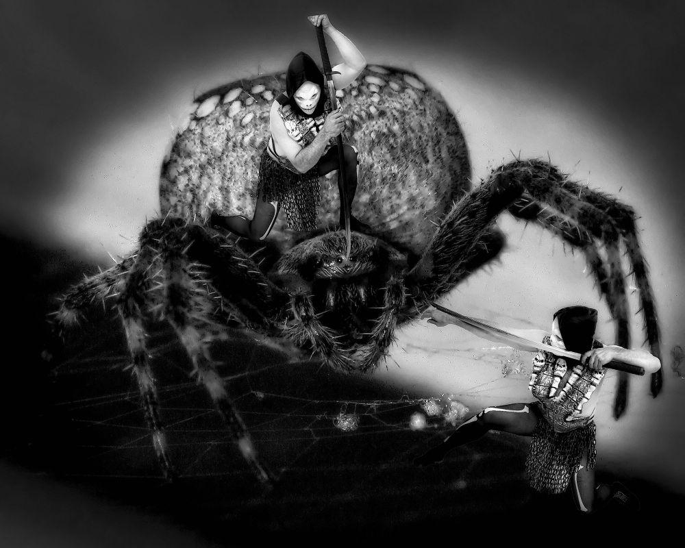 Spider Killer by paulhamilton969952