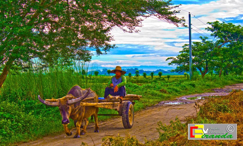 Farm by Cahns Miranda