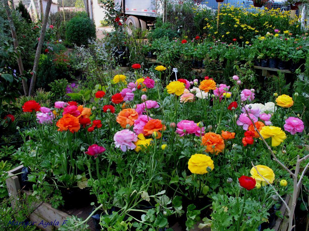 IMG_6356 spring is coming  :) by marigerayala