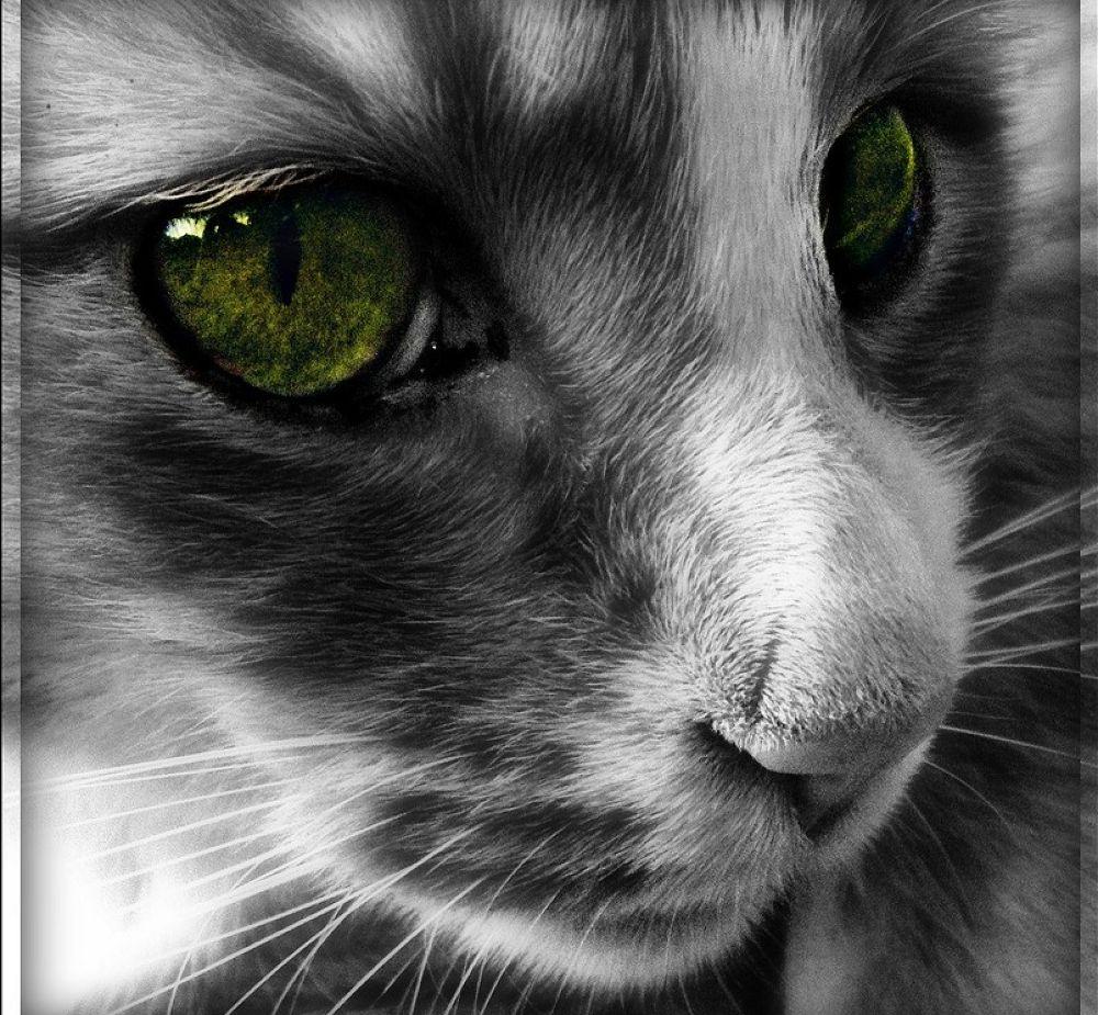 green eye by sillitilly