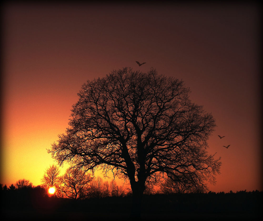 Photo in Nature #tree #sunset #nature #silhouette