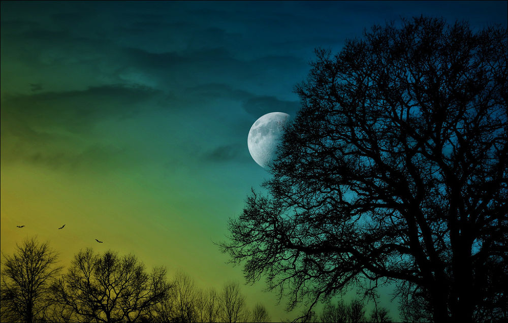 Photo in Nature #nature #tree #moon #silhouette