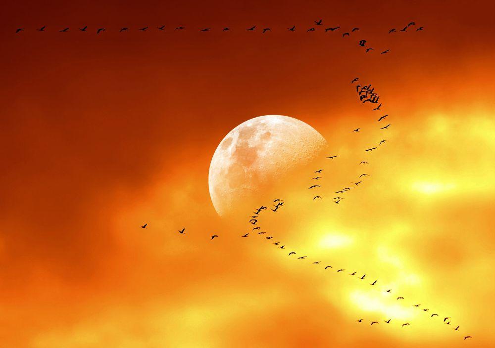 Photo in Random #birds #autumn #moon #sky