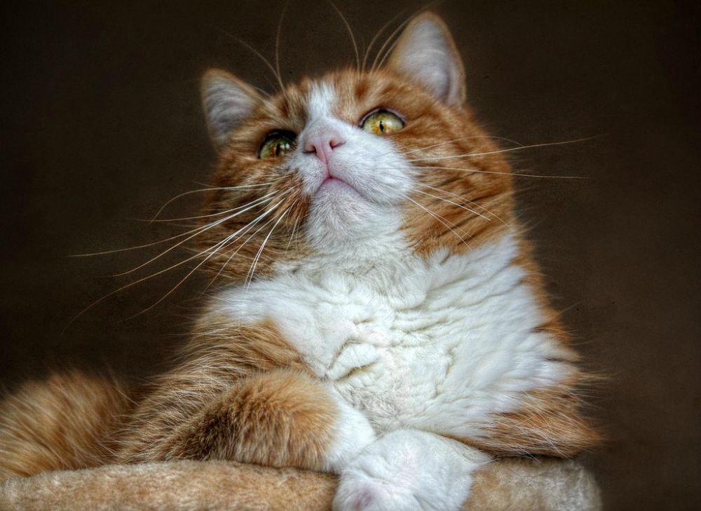 Photo in Animal #cat #animal #kitty #gato #feline #ypa2014