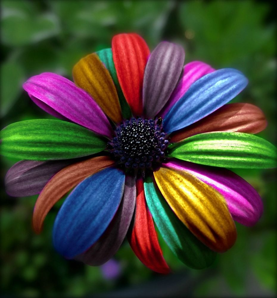 colourful by sillitilly