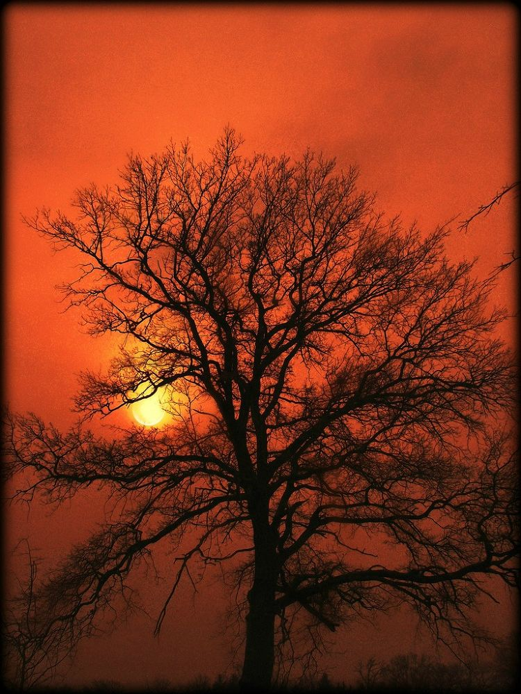 silhouette by sillitilly