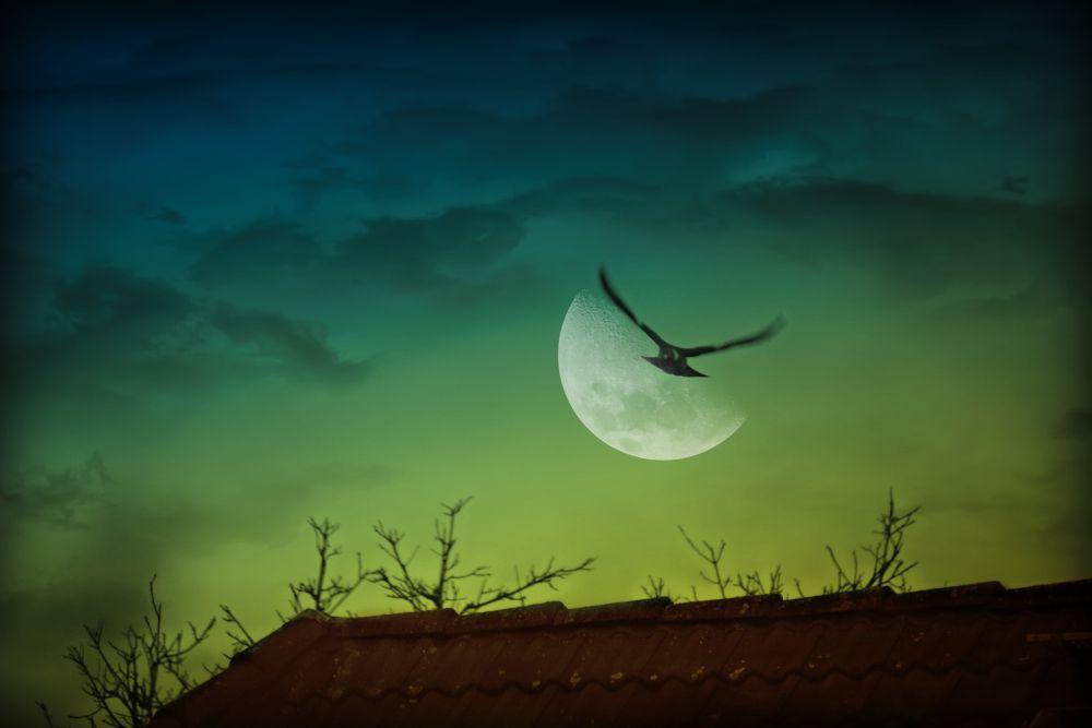 night flight by sillitilly